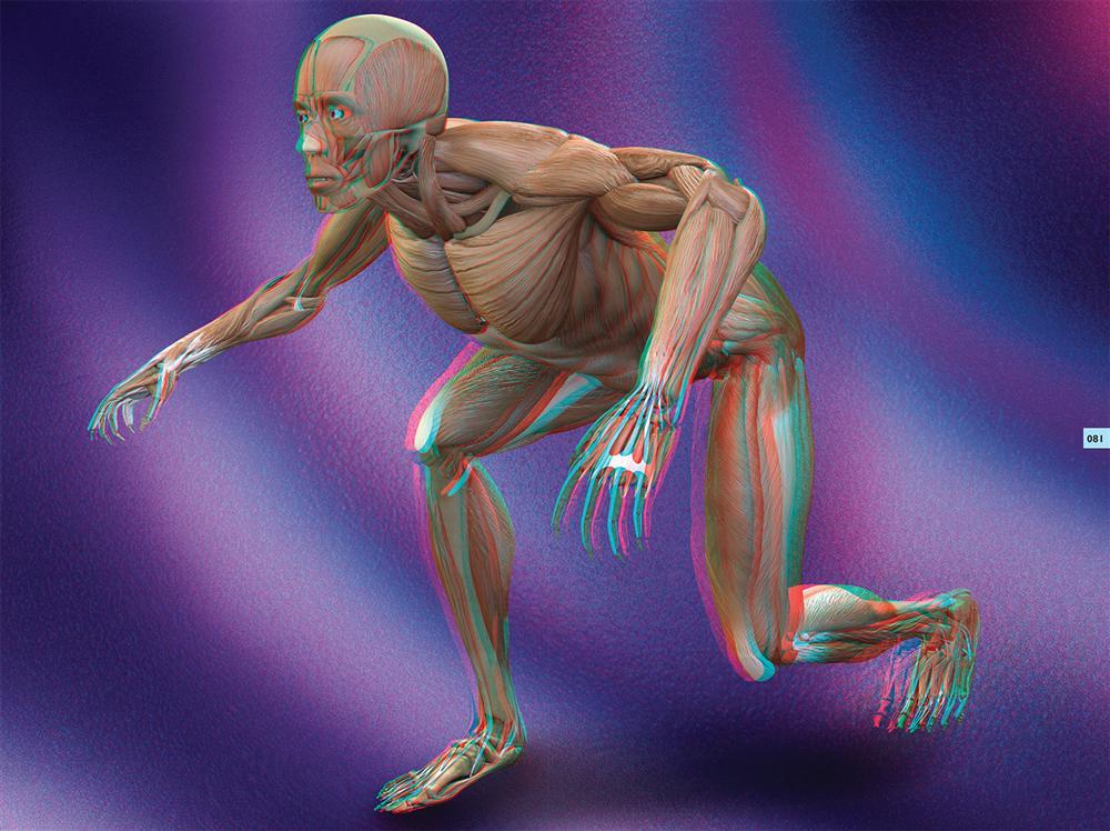 Grupo Clasa-Cuerpo Humano 3D