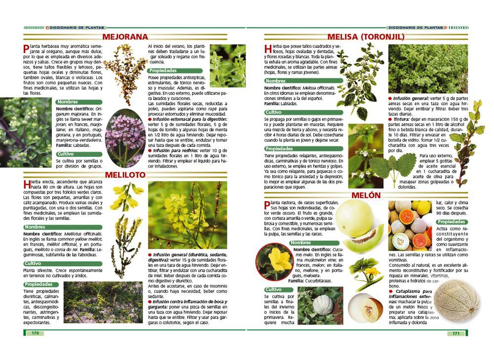 Grupo clasa las plantas y sus propiedades curativas for Planta decorativa propiedades medicinales